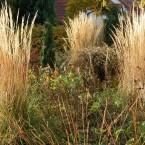 Herbstgold – Gräser im Garten