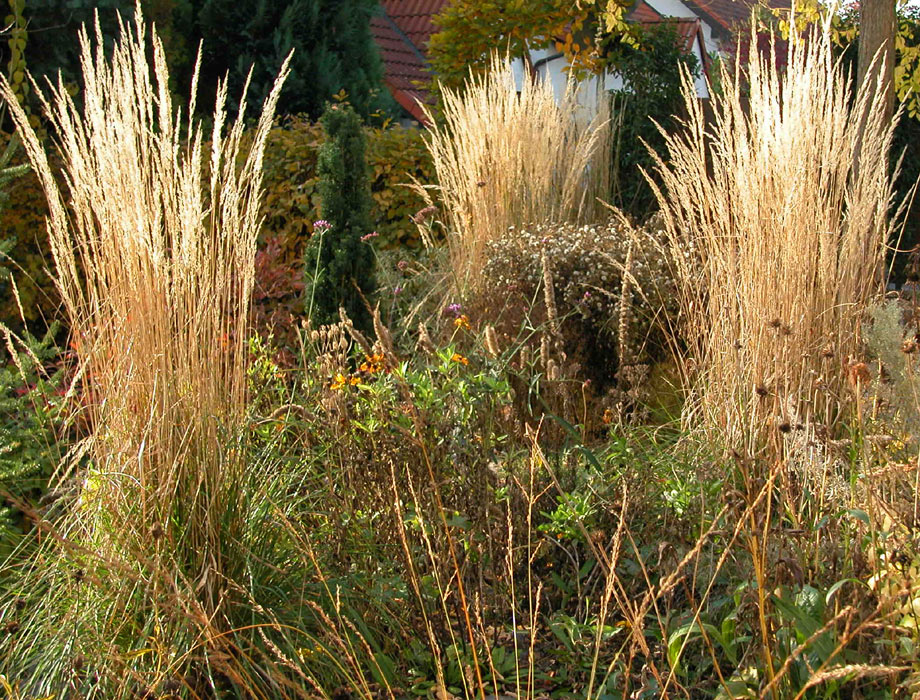 Herbstgold gr ser im garten tom k hler - Gartengestaltung graser ...